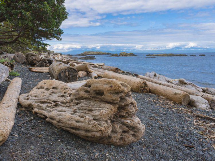Driftwood on beach on Nanaimo Vancouver island British Columbia Canada