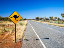 oad sign for kangaroos in Australia