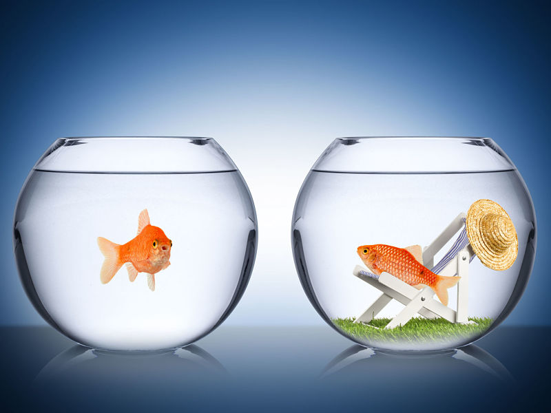 envy, fish bowl, holiday spending concept
