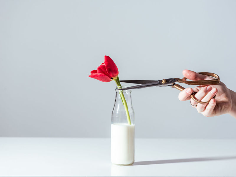 cropped shot of hand with scissors cutting red tulip flower in bottle
