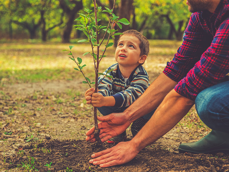 Curious little boy helping his father to plant the tree while working together in the garden