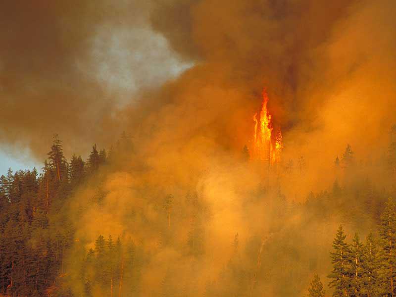 British Columbia wildfires