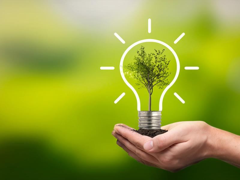 Lightbulb drawn around tree image, indicating sustainable ideas